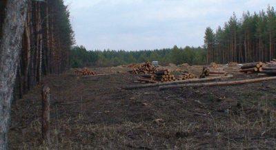 Ширина противопожарного разрыва в лесах